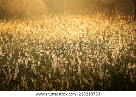 background golden at sunrise - stock photo