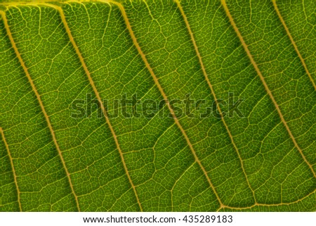 Background green leaves, Green leaf texture macro - stock photo