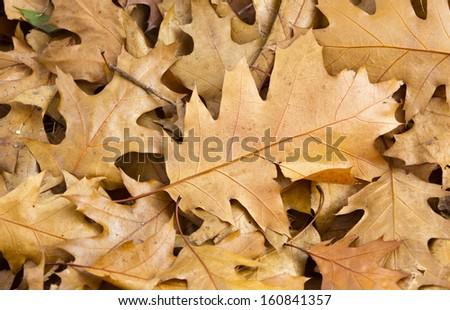 Background group autumn orange leaves - stock photo