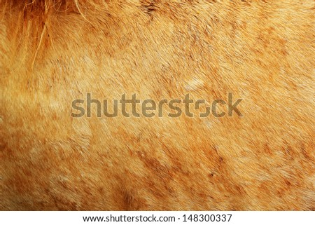 Background houses fur. - stock photo