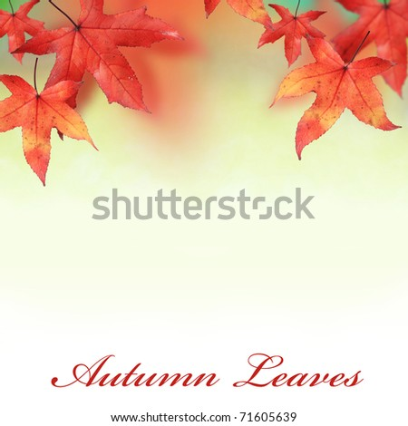 Background image of maple leaves in Autumn - stock photo