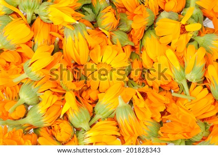 background made by heads of calendula flowers - stock photo