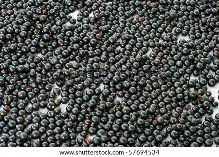 background made of black currant - stock photo