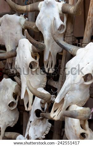Background made of bull skulls - stock photo