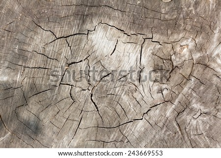 background - marco picture of a old  tree trunk  - stock photo
