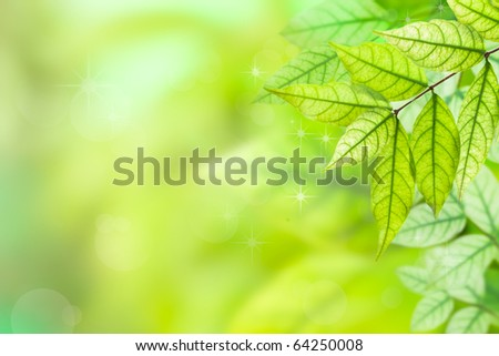 Background Nature green leaves - stock photo