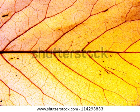 Background of a autumn leaf - stock photo
