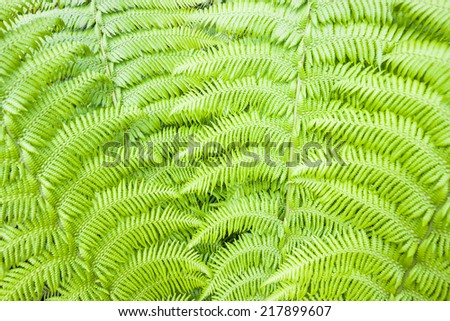 Background of a green fern - stock photo