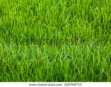 Background of a green grass.  Green grass texture - stock photo