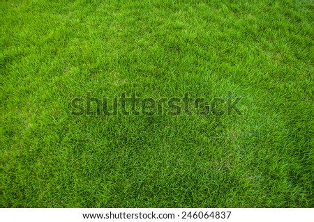 Background of a green grass,nature texture - stock photo