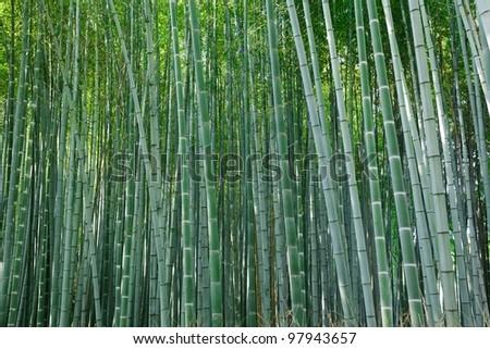 background of  arashiyama bamboo forest, Kyoto, Japan - stock photo