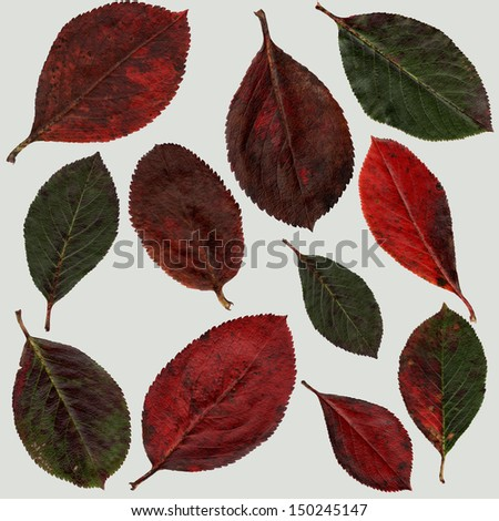 background of autumn leaves - stock photo