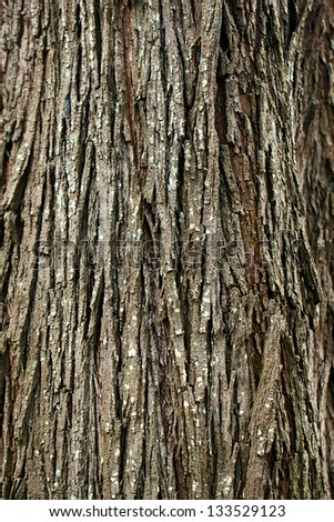 background of bark tree - stock photo