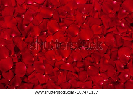 Background of  beautiful red rose petals - stock photo