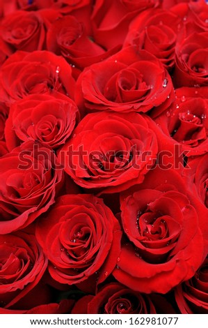 Background of beautiful red roses - stock photo