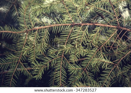 Background of Christmas tree branches in winter time. - stock photo