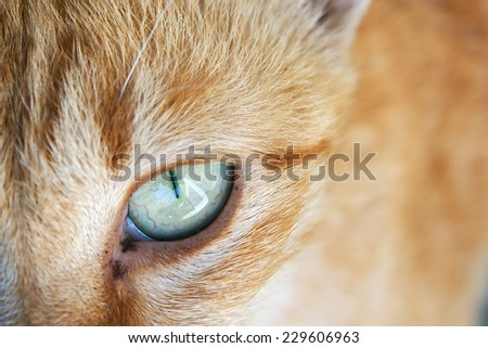 Background of close up cat face - stock photo