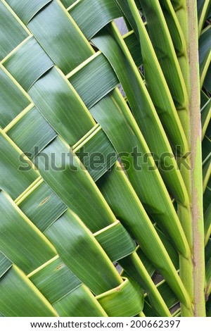 background of coconut leaves weave - stock photo