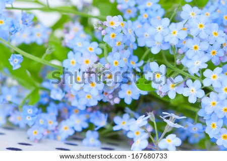 background of delicate blue flowers forget-me-on with green leaves - stock photo