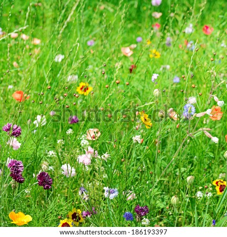 background of different wildflowers - stock photo