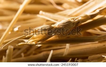 background of dry hay - stock photo