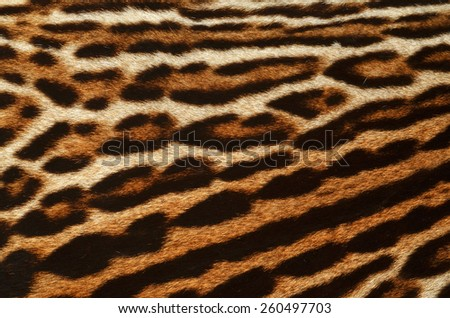 background of feline fur - stock photo