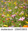 Background of Flowers Field - stock photo