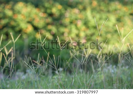 Background of fresh green grass backlit with the sun.  Shallow depth of field - stock photo