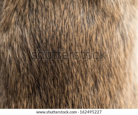 background of fur. texture - stock photo