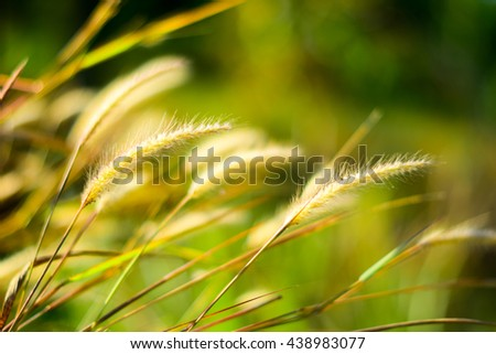Background of grass and flowers at sun rise, soft focus and blur. - stock photo