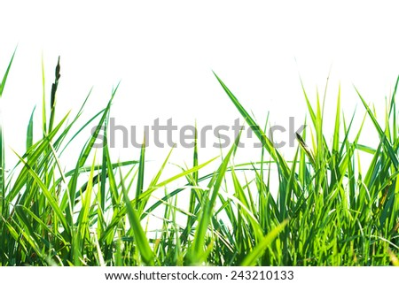Background of green grass - stock photo