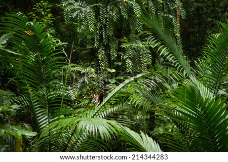 background of green rainforrest plants - stock photo