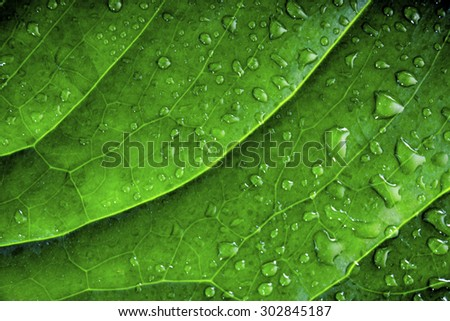 background of green wet leaf of an exotic plant with water drops close-up selective focus - stock photo