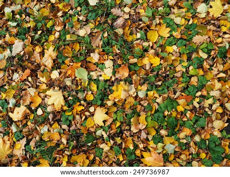 background of leaves on the ground - stock photo
