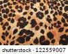background of leopard skin pattern - stock photo