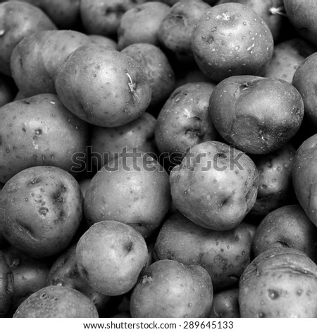 Background of many red potatoes together in square size. Black and white vegetable background of fresh potatoes. - stock photo