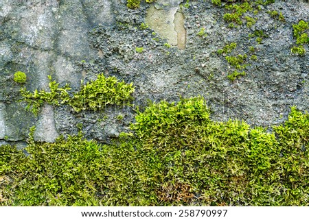 Background of old brick wall texture with moss - stock photo