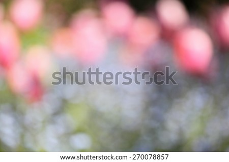 background of out of focus tulips flower or bokeh - stock photo