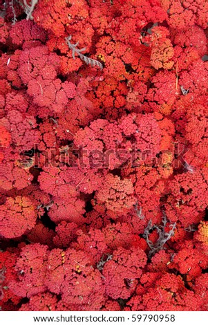 background of red flowers - stock photo