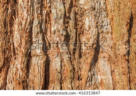 background of redwood tree bark - stock photo