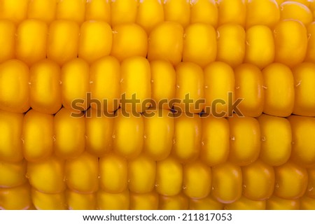 Background of ripe yellow corn - stock photo