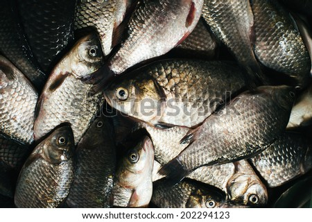background of river fish catch carp angler - stock photo