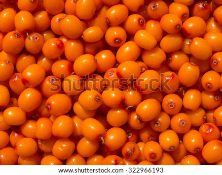 Background of sea buckthorn berryes. - stock photo