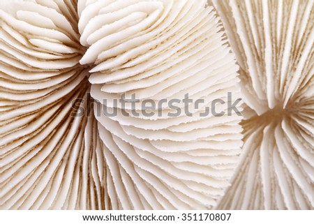 background of seashells of Fungia  , close up. - stock photo