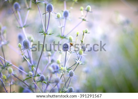 Background of small violet flowers ans a bee hovering around - stock photo
