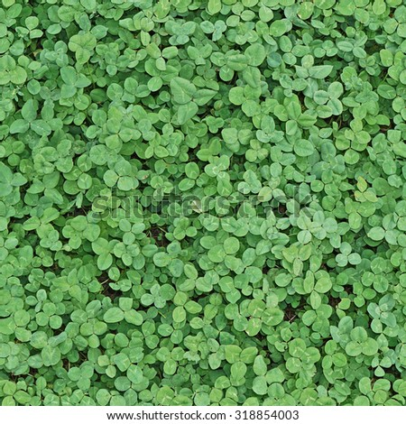 Background of the clover leaf. Seamless texture - stock photo