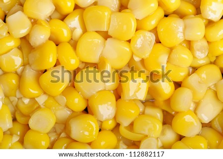 Background of the corn seeds - stock photo