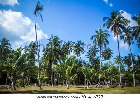 Background of tropical jungle on Koh Phangan - stock photo