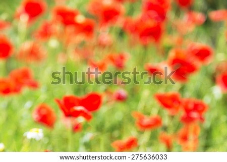 Background of unfocused shot of Red poppies in countryside  - stock photo