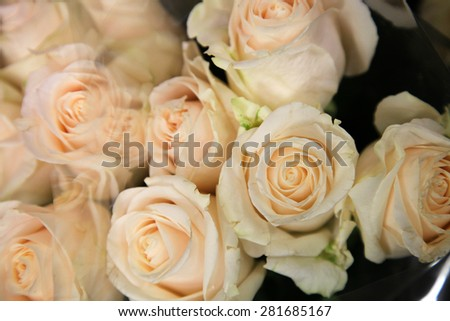 Background of vibrant cream Roses - stock photo
